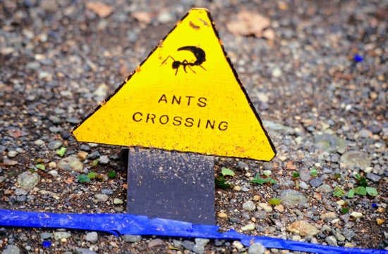 How-To: Getting Rid of Household Ants