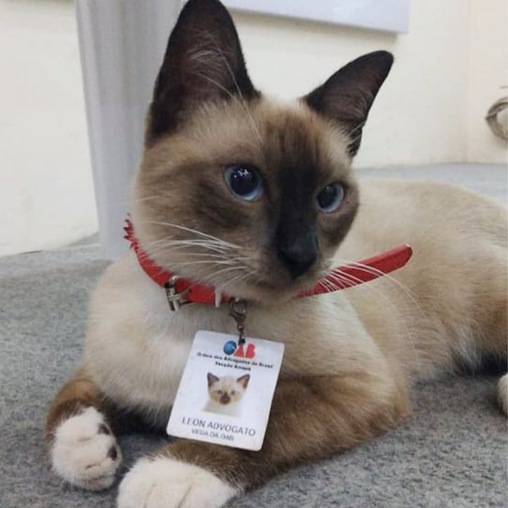 Leon The Cat Becomes A Lawyer After People Complained Popsugar Pets