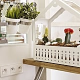 Despite the apartment's small size, Éléonore creates room for green life with hanging pots and a minigreenhouse.