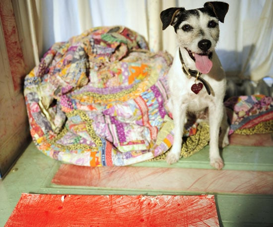 Name This Famous Doggie Painter!