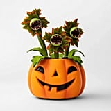 Animated Pumpkin With Dancing and Singing Vines