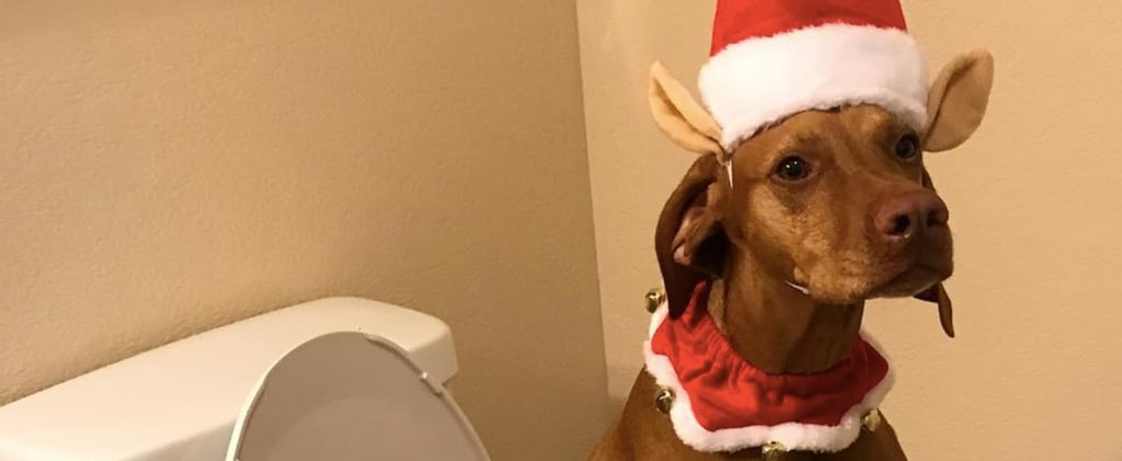 Woman Dresses Dog Up as Elf on the Shelf