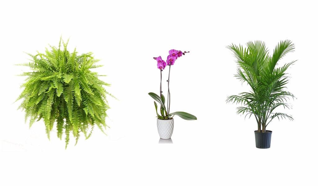 Revitalize Your Home in Just 48 Hours With Trendy Houseplants on Amazon Prime