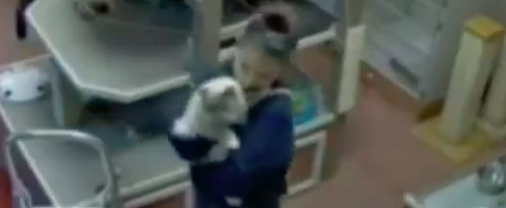 Pet Daycare Employee Dancing With Cat on Camera