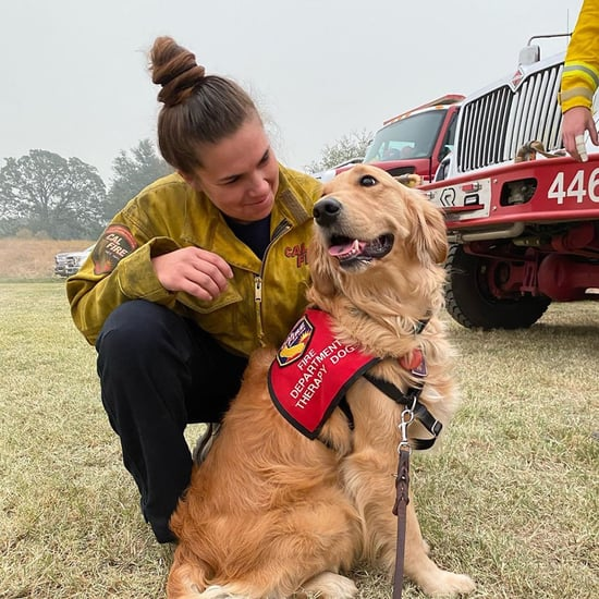 Golden Retriever Comforting California Firefighters