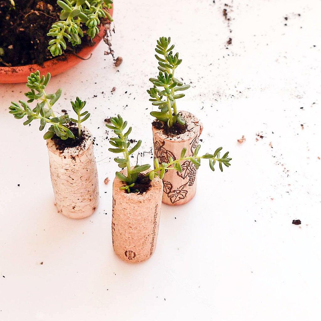 Cork Planters | DIY Stocking Fillers | POPSUGAR Smart Living