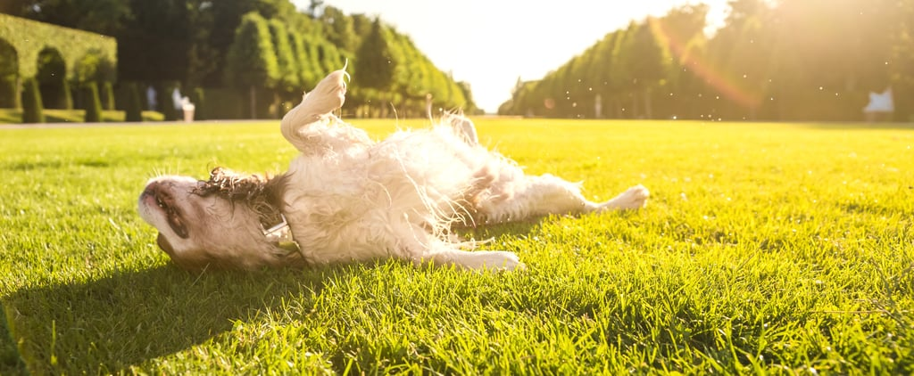 Why Does My Dog Lie in the Sun?