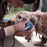 Netflix Dogs Documentary Trailer