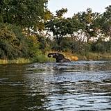 ليفينغستون، زامبيا