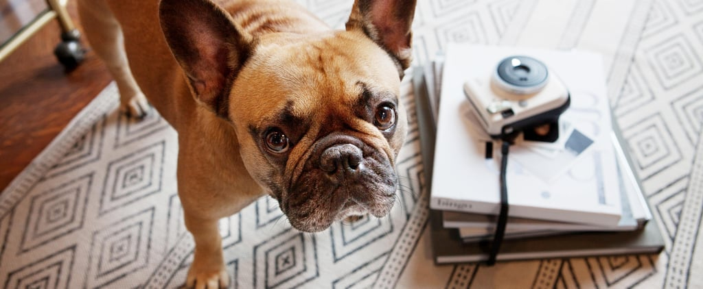 Best Pet Products on Amazon