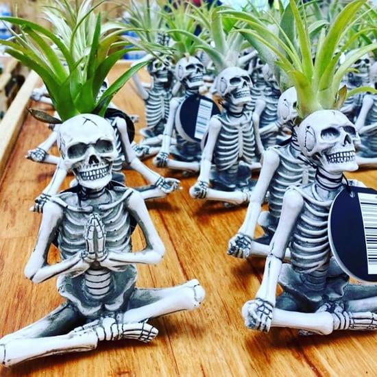 Trader Joe's Yoga Skeleton Air Plants Are Back For 2021