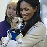 Meghan Quietly Assisted the UK's Mayhew Animal Welfare Charity