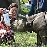 Kate Middleton Feeds Baby Elephants in India Pictures