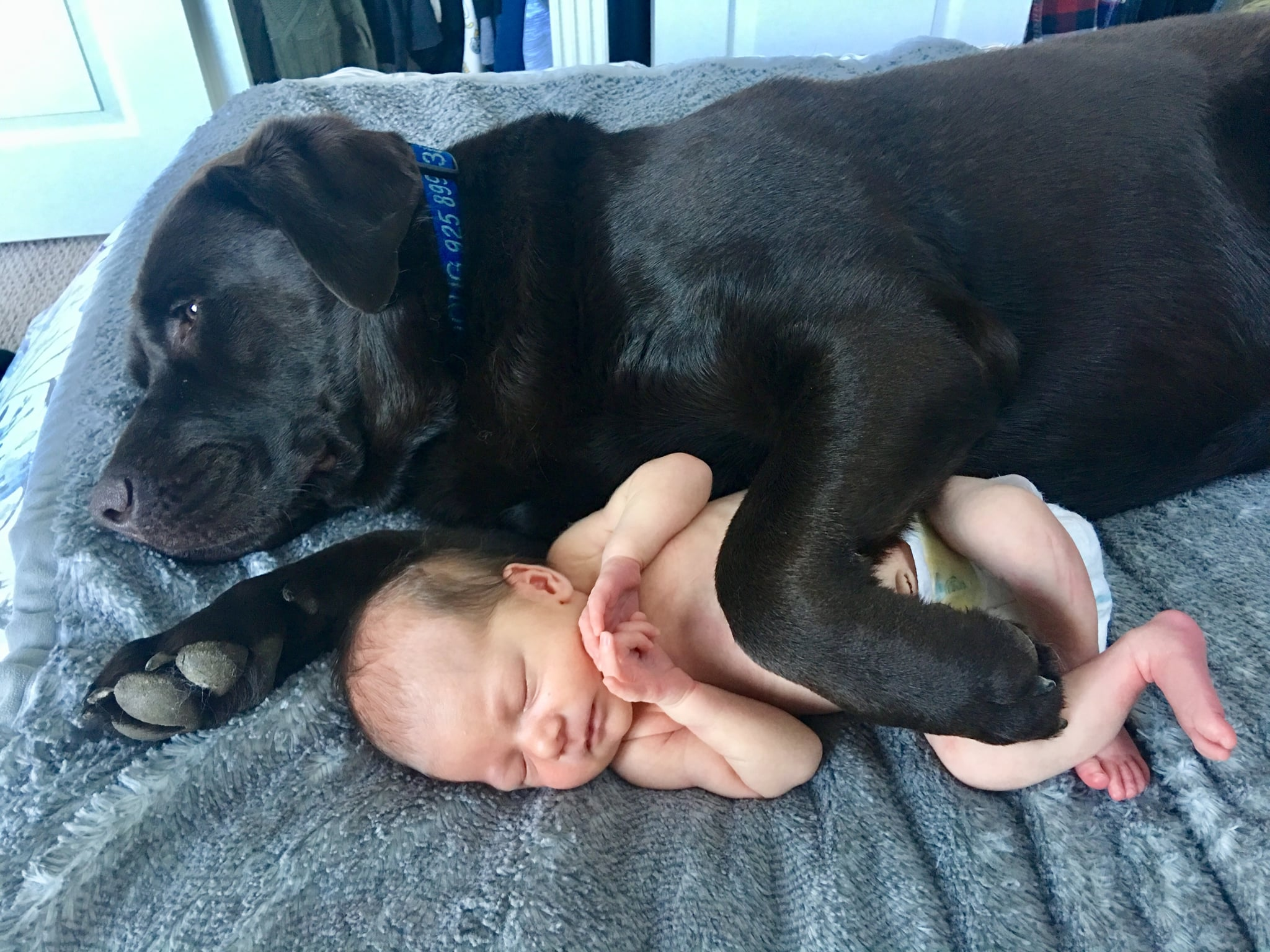 Cute Pictures Of Dogs Napping With Kids And Babies Popsugar Family