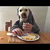 This cutie nonchalantly eating his breakfast in a hoodie like a boss.