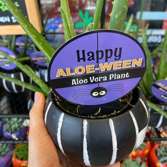 "Trader Joe's Has ""Happy Aloe-Ween"" Plants For Halloween"