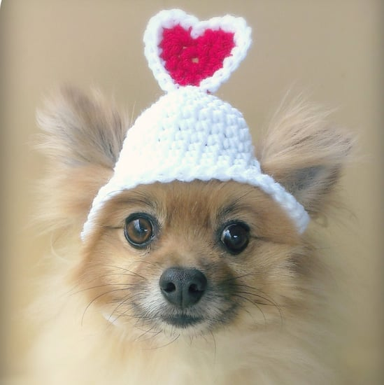Best Pet Products For Valentine's Day