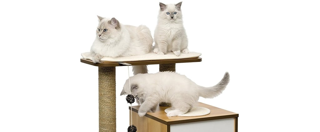The Best Cat House From Amazon