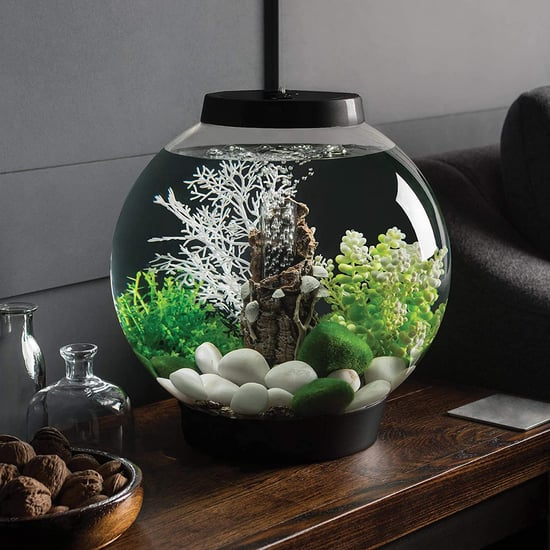 The 20 Best Fish Tanks for Beginners