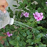 Then fill up your jug with good ol' H2O and start watering your thirsty plants.