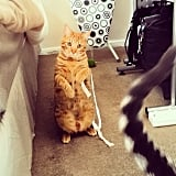 Look, I've already got a string — just wiggle it around a little bit so we can play together.