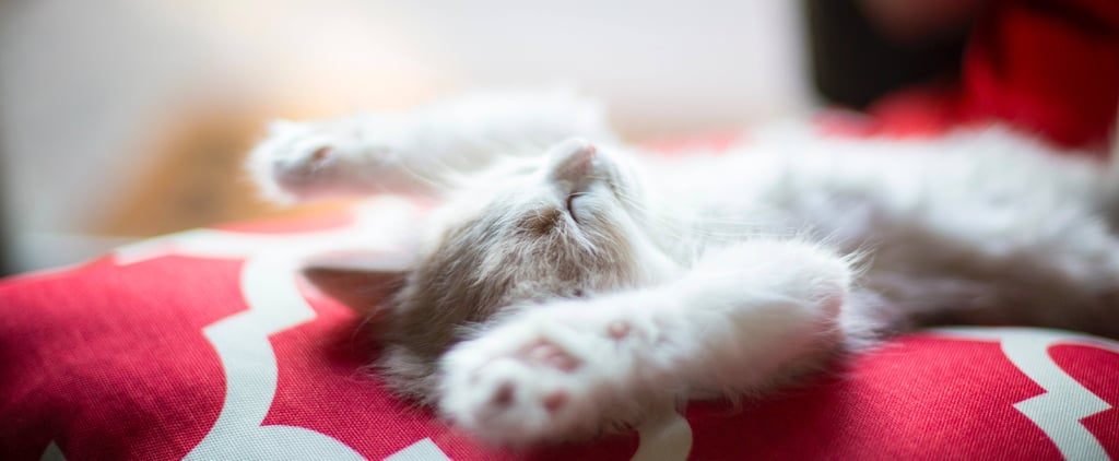 Sleep Expert Secrets