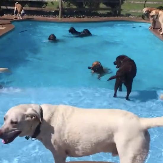 Video of a Dog Having a Birthday Pool Party