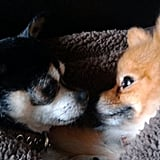 Pet Pic of the Day: Smooch