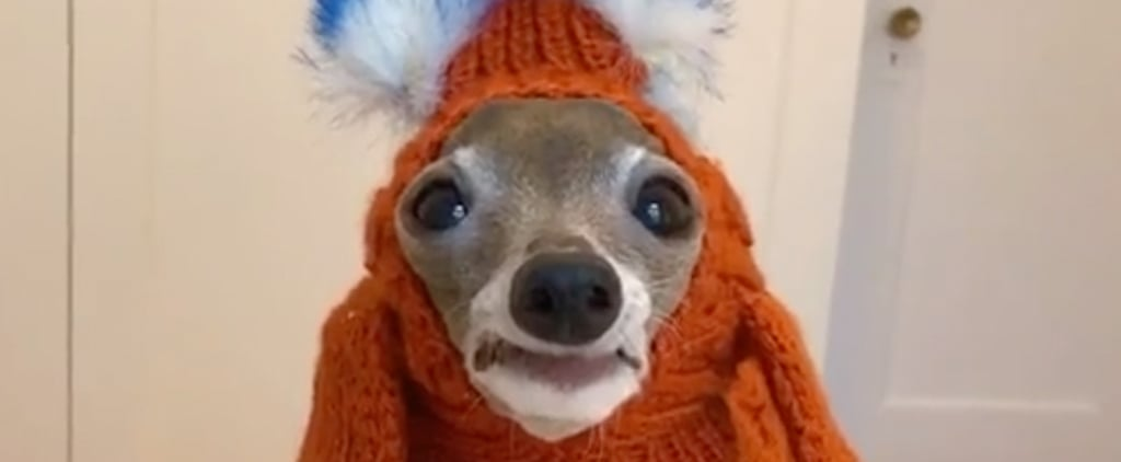 Sassy Italian Greyhound Tries on Outfits | TikTok Video