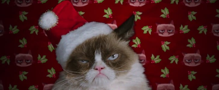 The First Trailer For the Grumpy Cat Film Is Here!