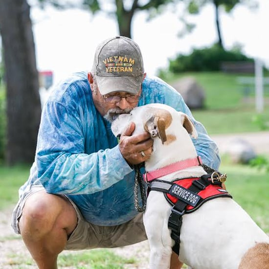 Pit Bull Helps Vietnam Vet Living With PTSD