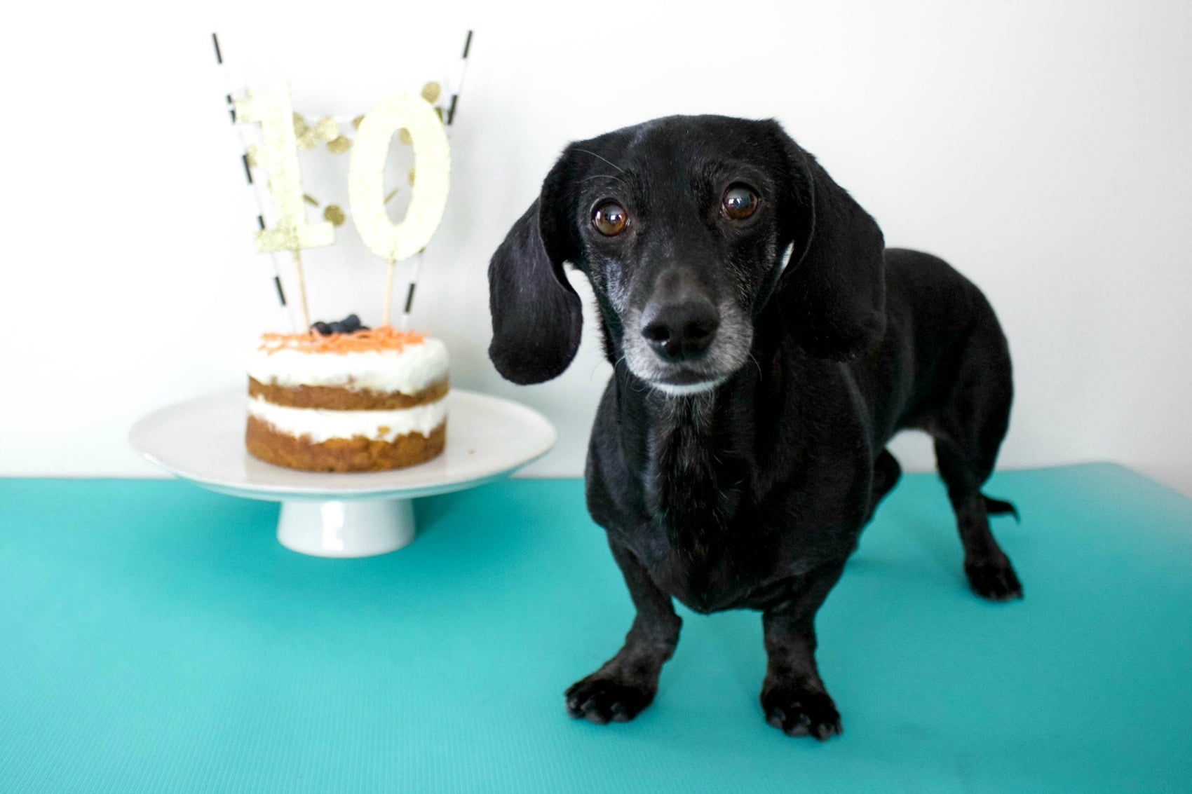 Birthday Cake Recipes And Ideas For Dogs Popsugar Pets