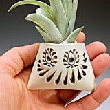 Funny Face Air Plant Holder