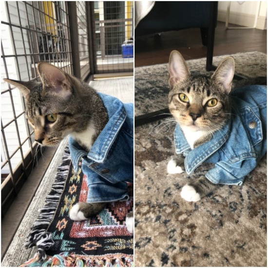 Cat Wears Jean Jacket in Viral Tweet