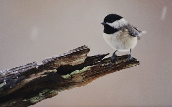 Feed the Birds: Make Your Own Peanut Butter Suet