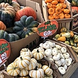 Squash and Gourds!