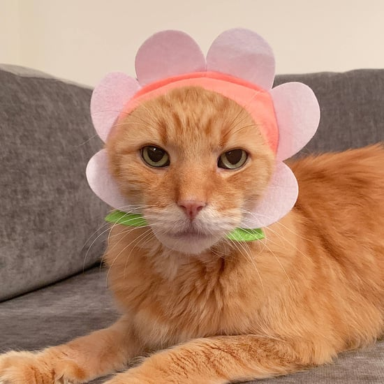 Flower Cat Cap From Urban Outfitters
