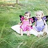 Little Butterfly Fairies