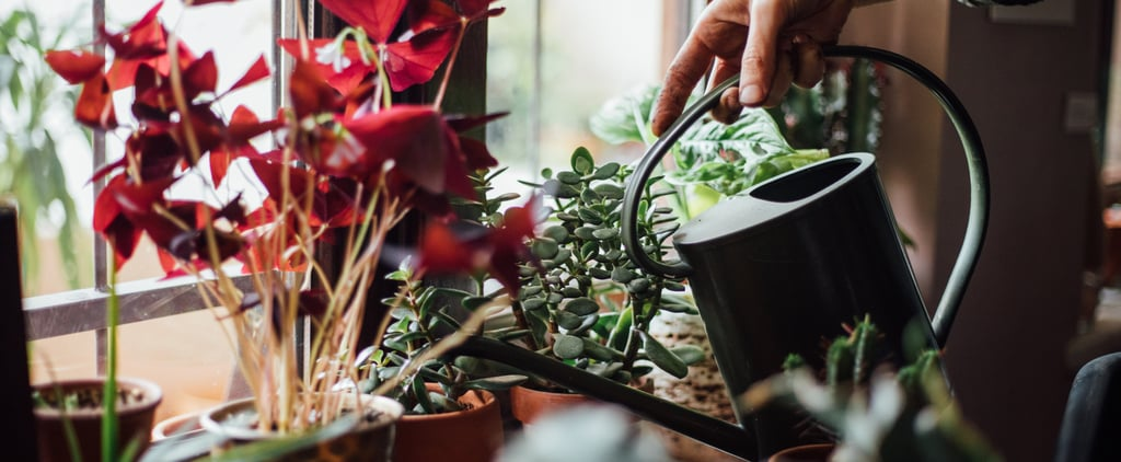 The Stress-Relieving Benefits of Having Plants in Your Home
