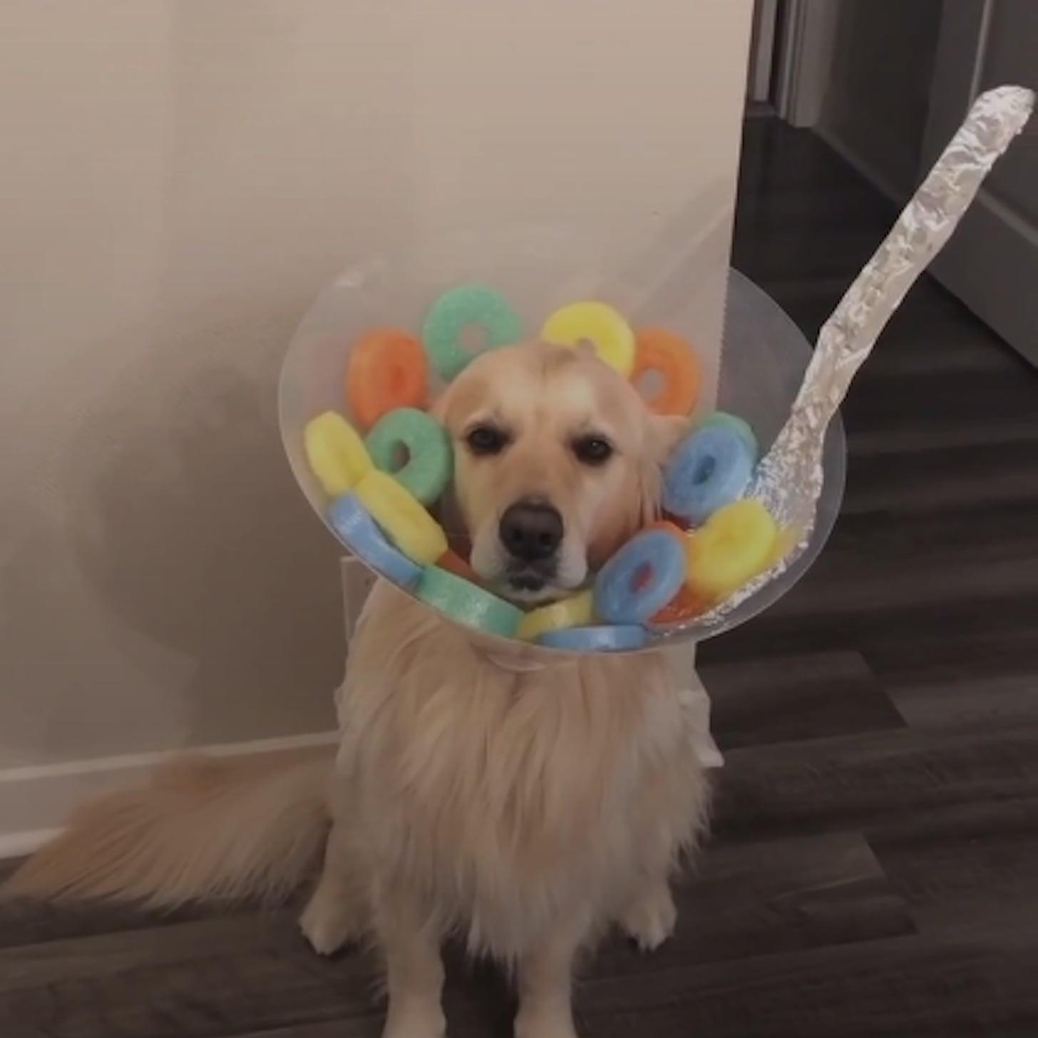 Dog Dressed As Fruit Loops For Halloween Popsugar Pets