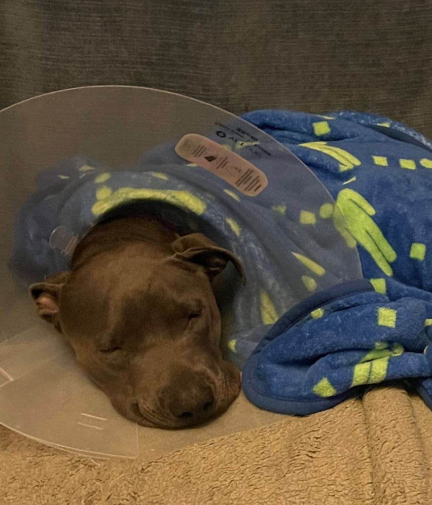 Billie Eilish's Dog Shark Got Surgery After Swallowing a Toy