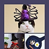 Best Cat Costumes For Halloween 2019