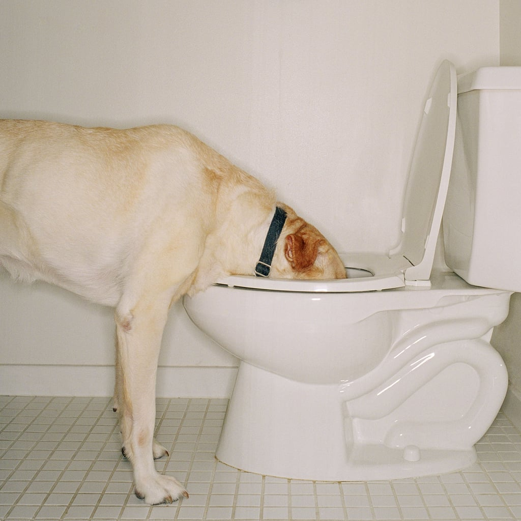Why Do Dogs Drink Out of the Toilet? | Vet Advice and Tips
