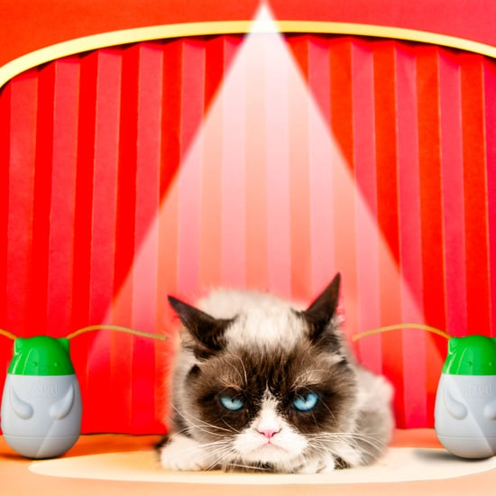 Grumpy Cat's Pet Peeves Interview