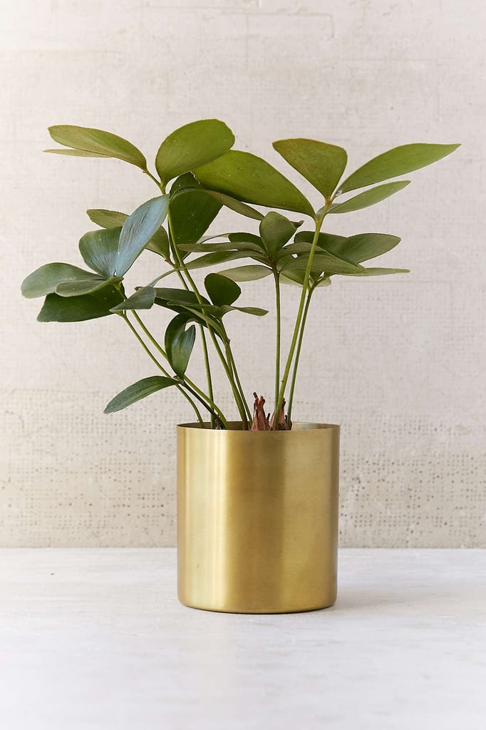 She's stylish; shouldn't her plants be, too? This metal planter ($10) will help dress up her greenery.