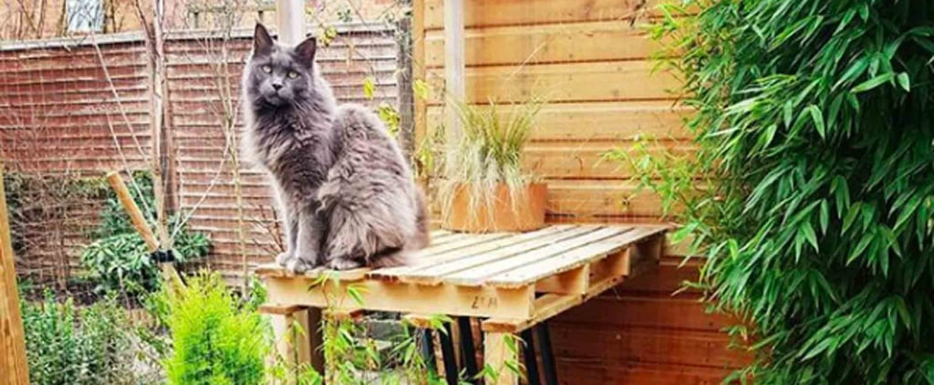 """Catios,"" or Cat Patios, Are the Latest Home Trend, Because Felines Are TOTAL Divas"