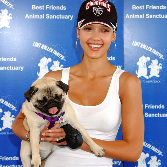 Jessica Alba's Dog Dies 2017