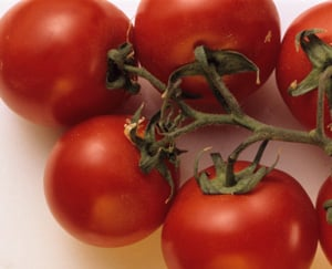 Tomatoes Expected in Restaurants and Stores Soon