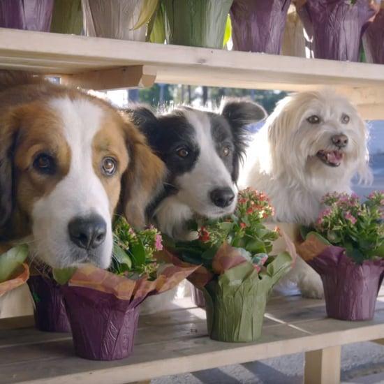 Doritos Dogs Super Bowl Commercial 2016