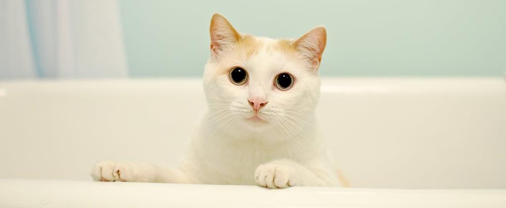 Why Do Cats Love the Bathtub?